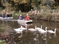 20191106 104717 swans leading boat and pontoon